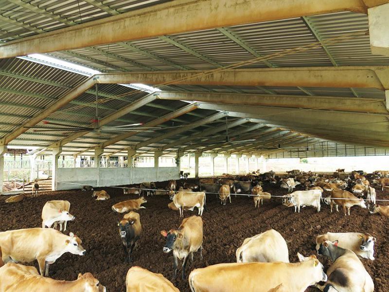 Ventilador para gado