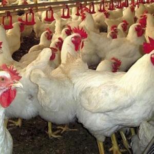 Ventilador para galpão de frango